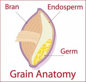 A whole grain is made up of three parts- the bran, endosperm and germ.