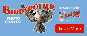 BirdSpotter Photo Contest