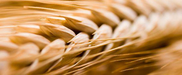 Wheatf