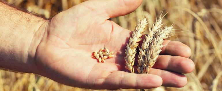 barley vs quinoa bob s red mill blog