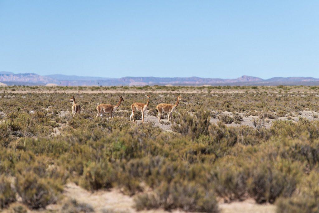 Engrais de quinoa lamas &quot;width =&quot; 750 &quot;height =&quot; 500 &quot;/&gt;<p class=
