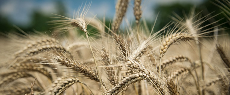 Wheat Bran vs Wheat Germ: What's the Difference? | Bob's Red